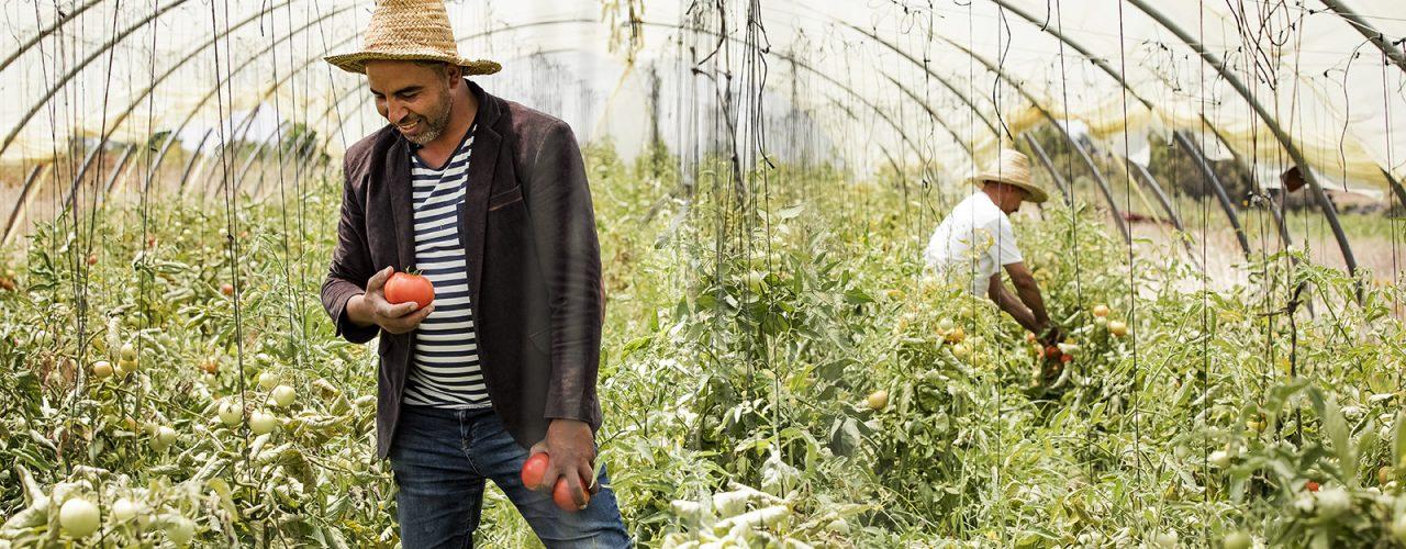 Tomato farmer in Rabat