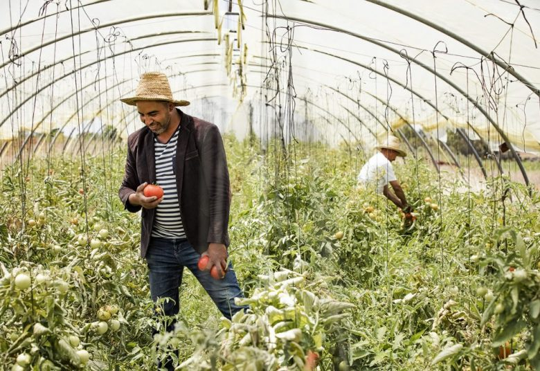 Tomato farmer in Rabat